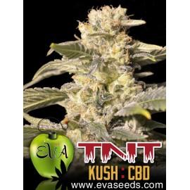 Eva Female Seeds - TNT CBD (3f)