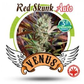 Venus Genetics - Red Skunk Auto (5f)