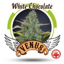 Venus Genetics - White Chocolate (5f)