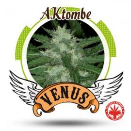 Venus Genetics - Aktombe (5f)