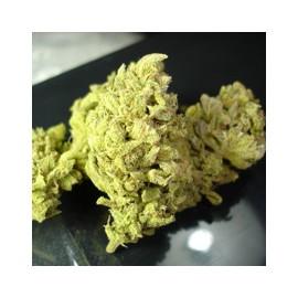 Medical Seeds - No Name (3f)