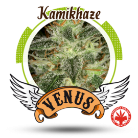 Venus Genetics - Kamikhaze (5f)