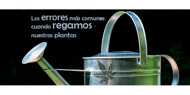 Los errores más comunes cuando regamos nuestras plantas